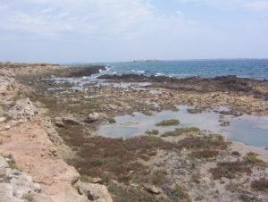 La wave-cut platform dell'Isola di San Pietro; sullo sfondo le strutture fortificate di epoca risorgimentale dell'Isola di San Paolo (Isole Chéradi)