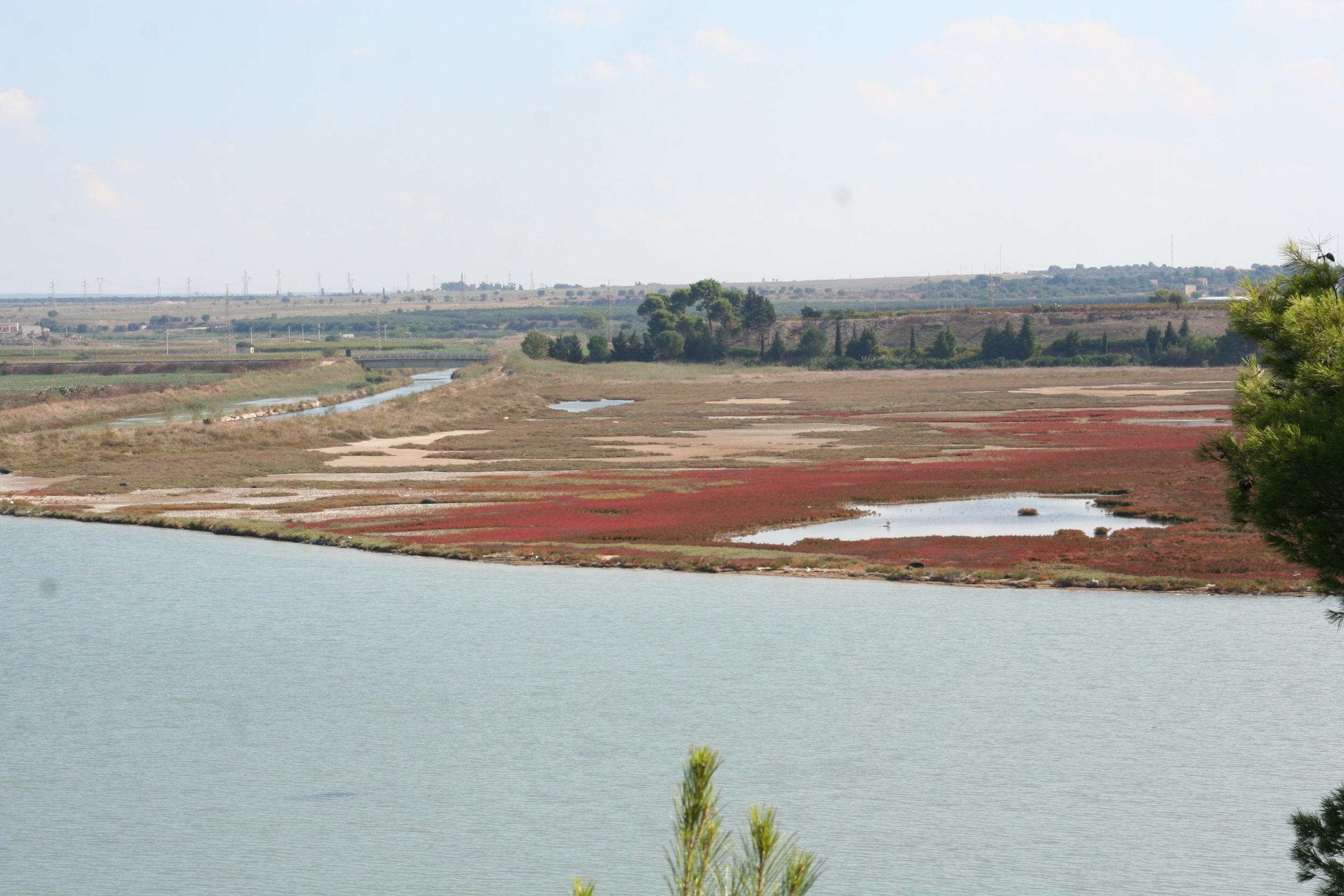 Le aree Umide della Palude La vela e il delta del sistema fluviale  D'Aiedda - Leverano D'Aquino nel secondo seno del Mar Piccolo a Taranto